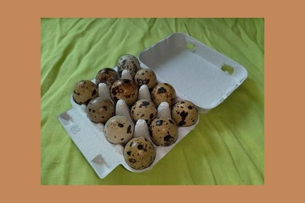 12-er Wachtel Eierkarton 600010
